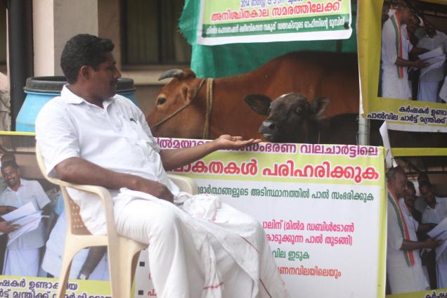 Jeemon Kaaraadi, a dairy farmer from Kottayam, protesting with his cows in front of the Milma Bhavan at Pattom in the city. Photo: S.R. Praveen / The Hindu