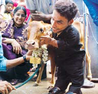 Actor Pakru with Manikyam, the shortest cow in the world, at Velur in Kozhikode on Saturday | K Shijith
