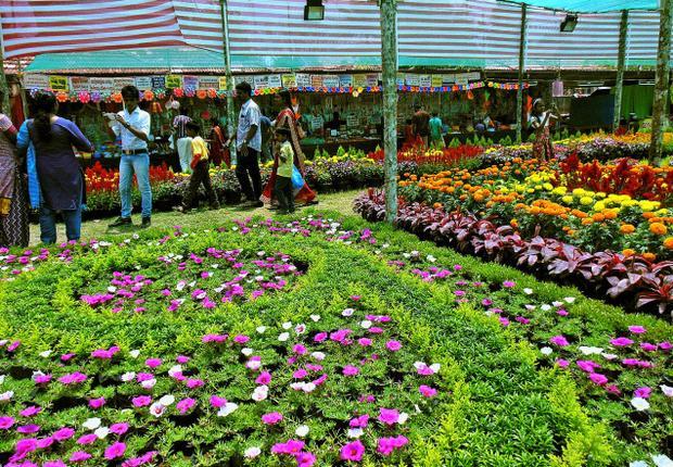 Views of the Thekkady Flower Show at Kallarackal grounds in Idukki on Sunday.— PHOTOS: GIJI K. RAMAN